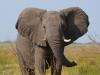 20120810_Grootfontein_Kongola